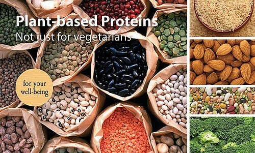 Plant protein powder | Plant-based protein powder supplement