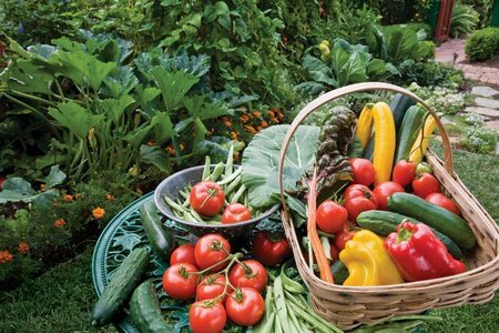 gardening, Gardening For Healthy Produce, Less Stress